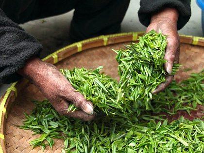 História čaju